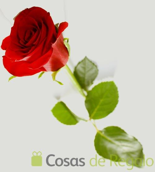 Sant Jordi, mucho más que un día de libros y de rosas